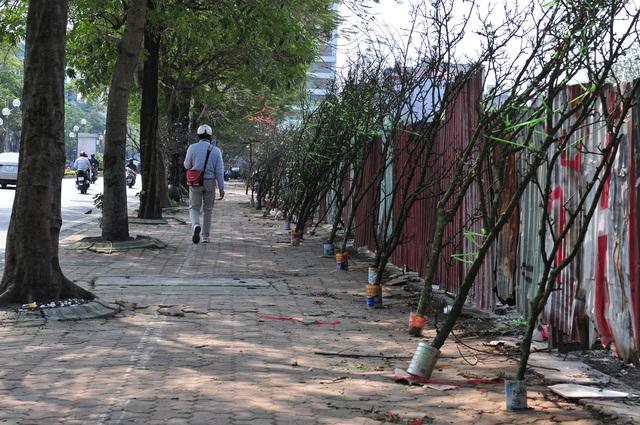 Hoa lê rừng về phố khiến người Hà Nội lạ lẫm, ngỡ ngàng - Ảnh 7.