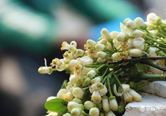 Hoa bưởi đầu mùa xuống phố, thơm nồng nàn khắp phố phường Hà Nội - Ảnh 2.