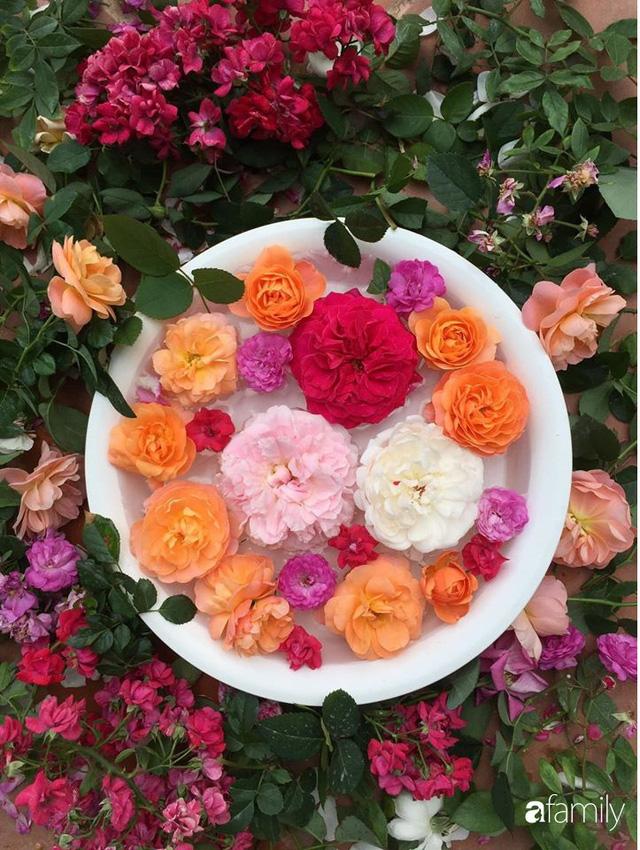 Mê hoa hồng, cô gái trẻ xứ Huế quyết tâm thức khuya dậy sớm tạo cả khu vườn hồng rực rỡ trên sân thượng - Ảnh 14.
