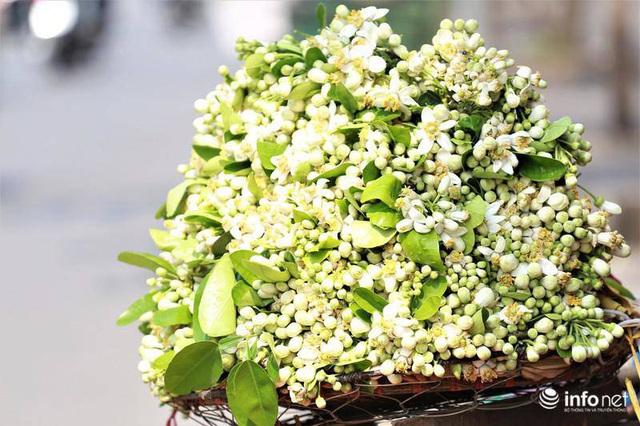 Hoa bưởi đầu mùa xuống phố, thơm nồng nàn khắp phố phường Hà Nội - Ảnh 12.