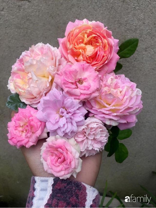 Mê hoa hồng, cô gái trẻ xứ Huế quyết tâm thức khuya dậy sớm tạo cả khu vườn hồng rực rỡ trên sân thượng - Ảnh 15.
