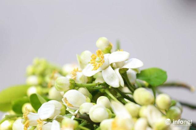Hoa bưởi đầu mùa xuống phố, thơm nồng nàn khắp phố phường Hà Nội - Ảnh 13.