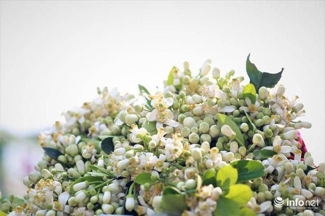 Hoa bưởi đầu mùa xuống phố, thơm nồng nàn khắp phố phường Hà Nội - Ảnh 14.