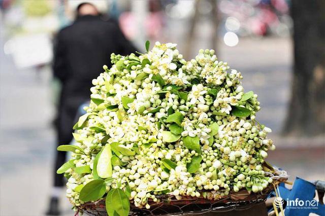 Hoa bưởi đầu mùa xuống phố, thơm nồng nàn khắp phố phường Hà Nội - Ảnh 4.