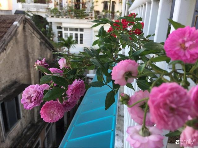 Mê hoa hồng, cô gái trẻ xứ Huế quyết tâm thức khuya dậy sớm tạo cả khu vườn hồng rực rỡ trên sân thượng - Ảnh 6.