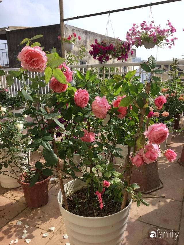 Mê hoa hồng, cô gái trẻ xứ Huế quyết tâm thức khuya dậy sớm tạo cả khu vườn hồng rực rỡ trên sân thượng - Ảnh 7.