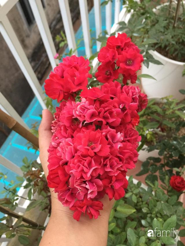 Mê hoa hồng, cô gái trẻ xứ Huế quyết tâm thức khuya dậy sớm tạo cả khu vườn hồng rực rỡ trên sân thượng - Ảnh 9.