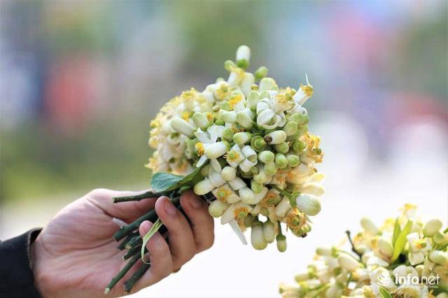 Hoa bưởi đầu mùa xuống phố, thơm nồng nàn khắp phố phường Hà Nội - Ảnh 10.