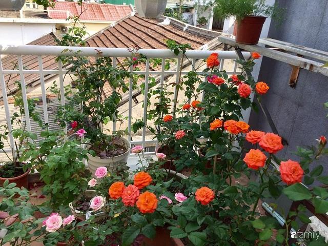Mê hoa hồng, cô gái trẻ xứ Huế quyết tâm thức khuya dậy sớm tạo cả khu vườn hồng rực rỡ trên sân thượng - Ảnh 13.