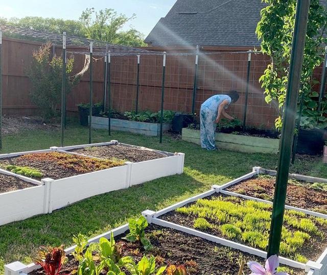 Con gái tặng mẹ vườn rau Việt trên đất Mỹ  - Ảnh 3.
