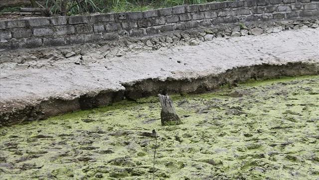 Hải Phòng khai quật bãi cọc Đầm Thượng, xã Lại Xuân, huyện Thủy Nguyên - Ảnh 2.