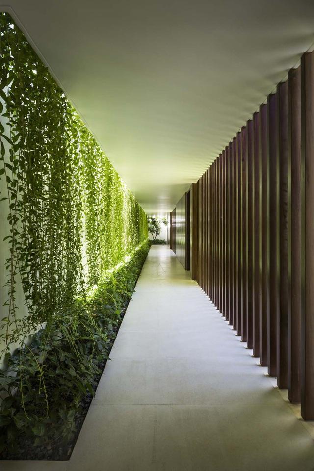 Ngôi nhà 1 tầng mát mẻ quanh năm nhờ cây xanh phủ khắp lối - Ảnh 9.