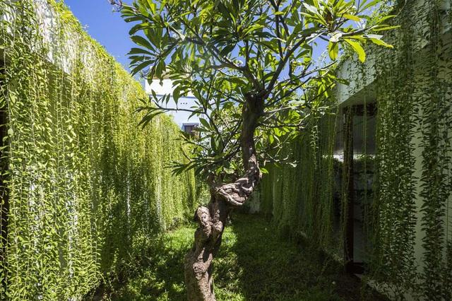 Ngôi nhà 1 tầng mát mẻ quanh năm nhờ cây xanh phủ khắp lối - Ảnh 10.
