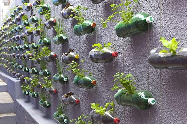 Tận dụng vỏ chai nước ngọt làm thành khu vườn khiến ai cũng mê mẩn - Ảnh 6.