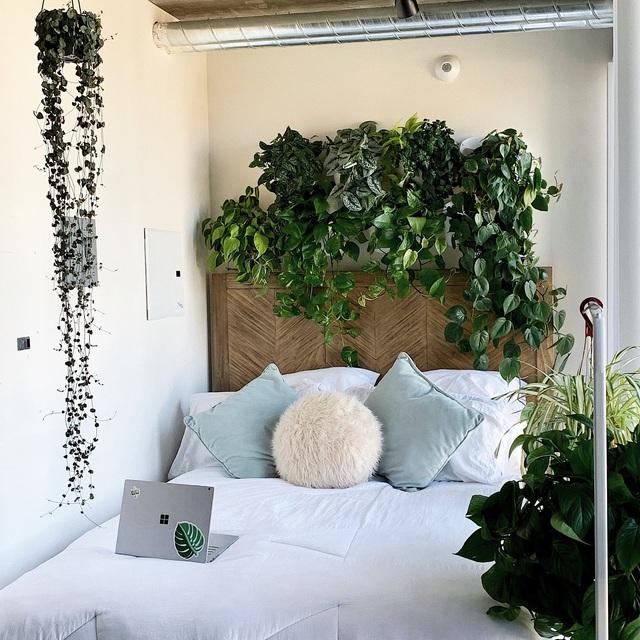Gia chủ khiến ai cũng ngạc nhiên với hơn 50 loại cây phủ xanh căn hộ 120 mét vuông của mình - Ảnh 2.