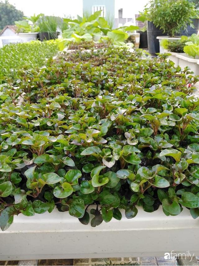 Sân thượng 25m² xanh tốt đủ rau quả quanh năm của cô giáo dạy Toán ở Quảng Ngãi - Ảnh 2.