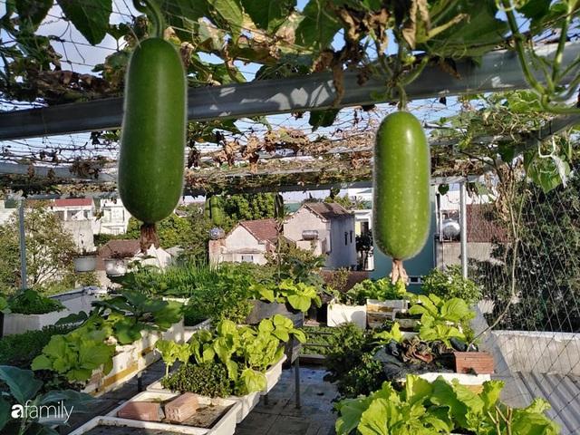 Sân thượng 25m² xanh tốt đủ rau quả quanh năm của cô giáo dạy Toán ở Quảng Ngãi - Ảnh 3.