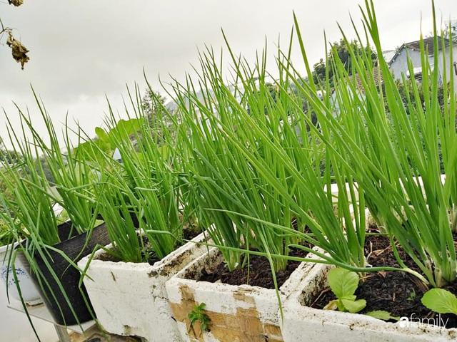 Sân thượng 25m² xanh tốt đủ rau quả quanh năm của cô giáo dạy Toán ở Quảng Ngãi - Ảnh 13.