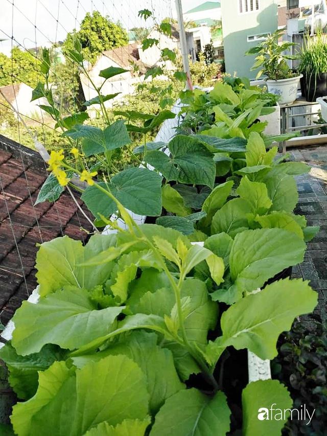 Sân thượng 25m² xanh tốt đủ rau quả quanh năm của cô giáo dạy Toán ở Quảng Ngãi - Ảnh 14.
