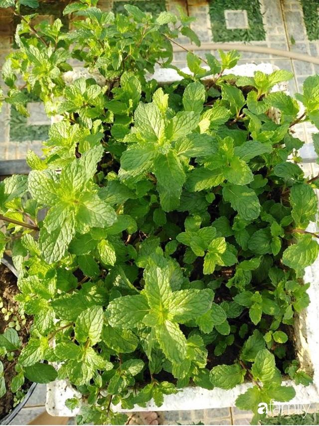Sân thượng 25m² xanh tốt đủ rau quả quanh năm của cô giáo dạy Toán ở Quảng Ngãi - Ảnh 16.