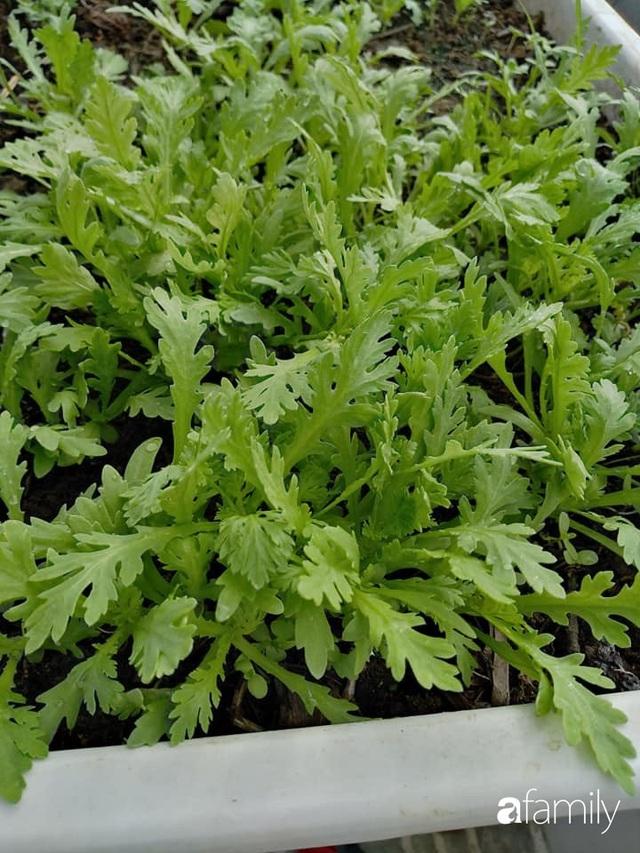Sân thượng 25m² xanh tốt đủ rau quả quanh năm của cô giáo dạy Toán ở Quảng Ngãi - Ảnh 18.