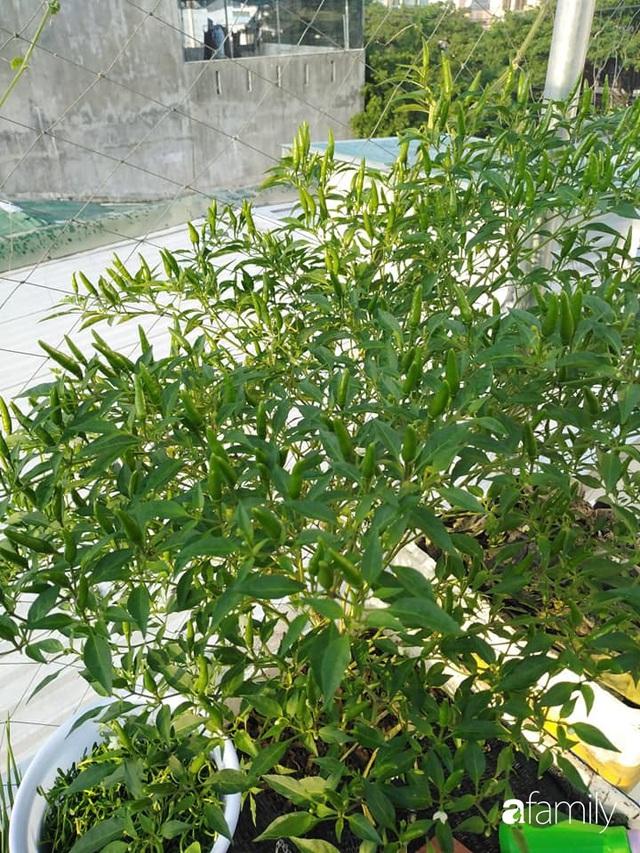 Sân thượng 25m² xanh tốt đủ rau quả quanh năm của cô giáo dạy Toán ở Quảng Ngãi - Ảnh 24.