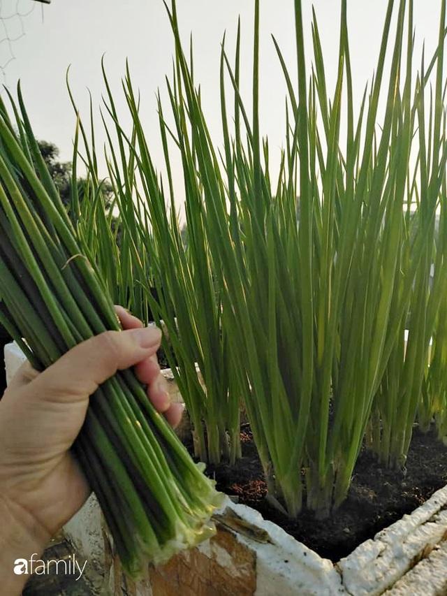 Sân thượng 25m² xanh tốt đủ rau quả quanh năm của cô giáo dạy Toán ở Quảng Ngãi - Ảnh 26.