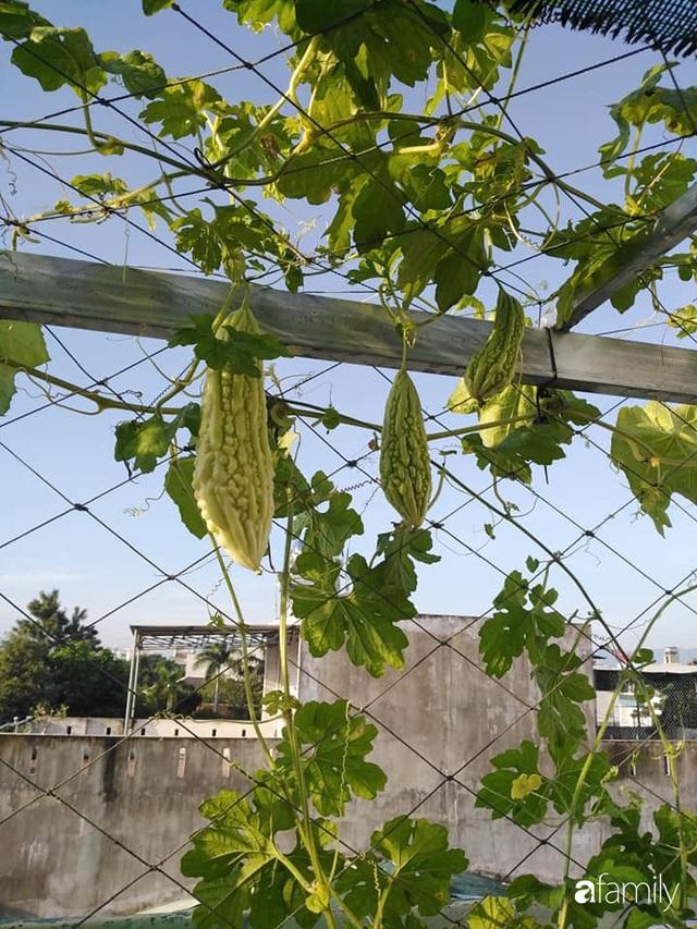 Sân thượng 25m² xanh tốt đủ rau quả quanh năm của cô giáo dạy Toán ở Quảng Ngãi - Ảnh 27.