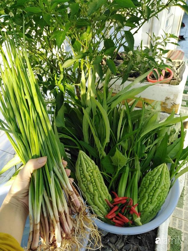 Sân thượng 25m² xanh tốt đủ rau quả quanh năm của cô giáo dạy Toán ở Quảng Ngãi - Ảnh 28.