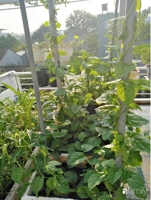Sân thượng 25m² xanh tốt đủ rau quả quanh năm của cô giáo dạy Toán ở Quảng Ngãi - Ảnh 29.