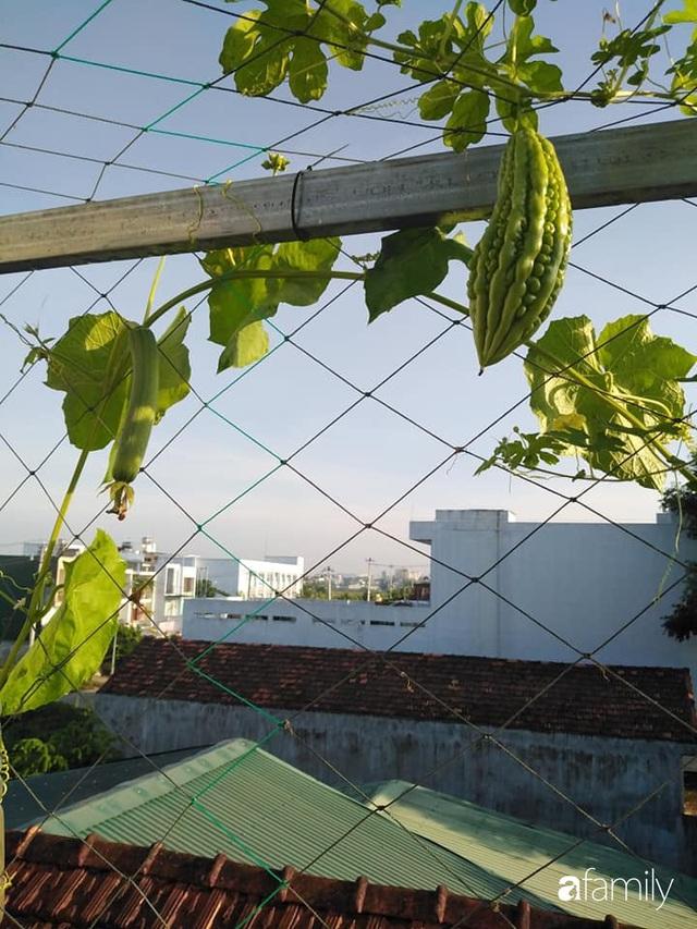 Sân thượng 25m² xanh tốt đủ rau quả quanh năm của cô giáo dạy Toán ở Quảng Ngãi - Ảnh 33.