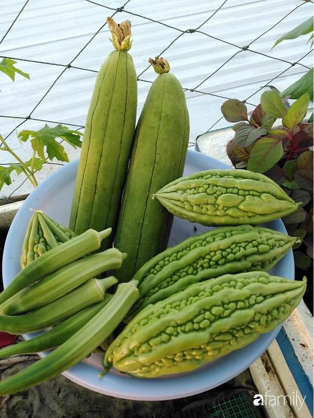 Sân thượng 25m² xanh tốt đủ rau quả quanh năm của cô giáo dạy Toán ở Quảng Ngãi - Ảnh 35.