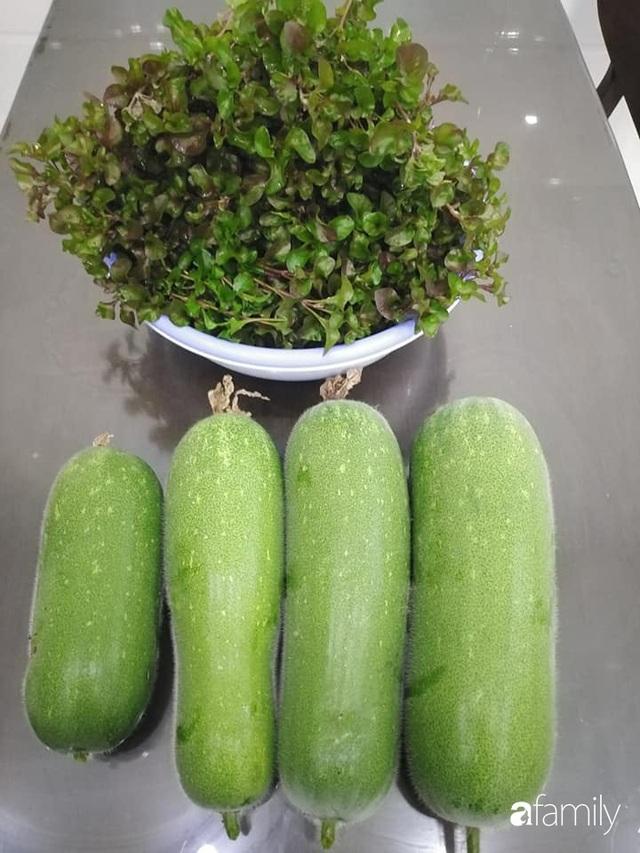 Sân thượng 25m² xanh tốt đủ rau quả quanh năm của cô giáo dạy Toán ở Quảng Ngãi - Ảnh 7.
