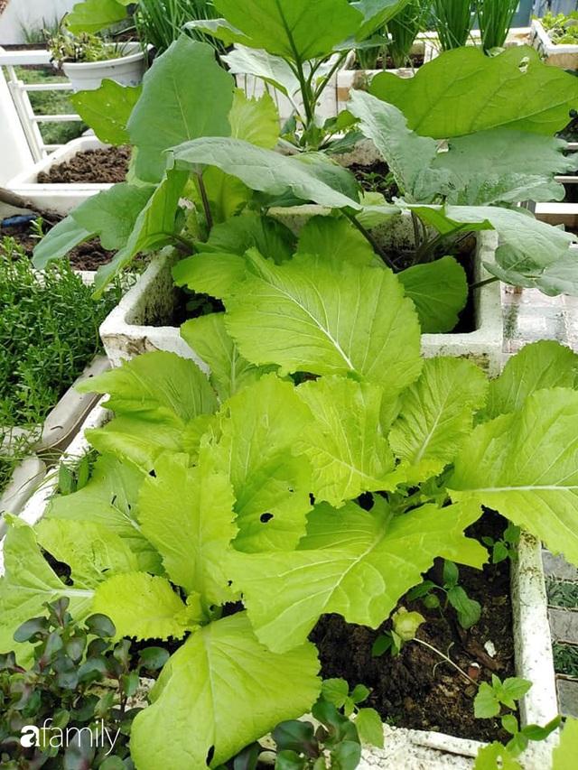 Sân thượng 25m² xanh tốt đủ rau quả quanh năm của cô giáo dạy Toán ở Quảng Ngãi - Ảnh 8.