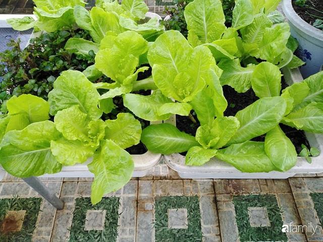 Sân thượng 25m² xanh tốt đủ rau quả quanh năm của cô giáo dạy Toán ở Quảng Ngãi - Ảnh 9.