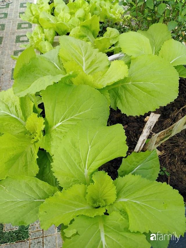 Sân thượng 25m² xanh tốt đủ rau quả quanh năm của cô giáo dạy Toán ở Quảng Ngãi - Ảnh 10.