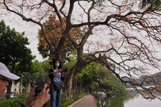 Dân chụp ảnh mê mẩn với cây bằng lăng huyền thoại bên Hồ Gươm đang thay lá - Ảnh 6.