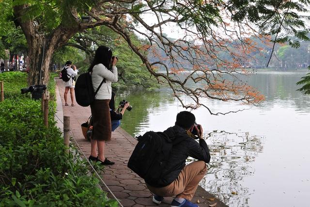 Dân chụp ảnh mê mẩn với cây bằng lăng huyền thoại bên Hồ Gươm đang thay lá - Ảnh 9.