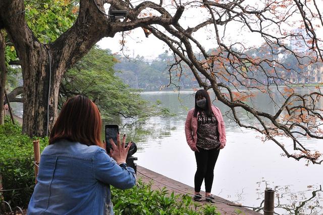 Dân chụp ảnh mê mẩn với cây bằng lăng huyền thoại bên Hồ Gươm đang thay lá - Ảnh 8.