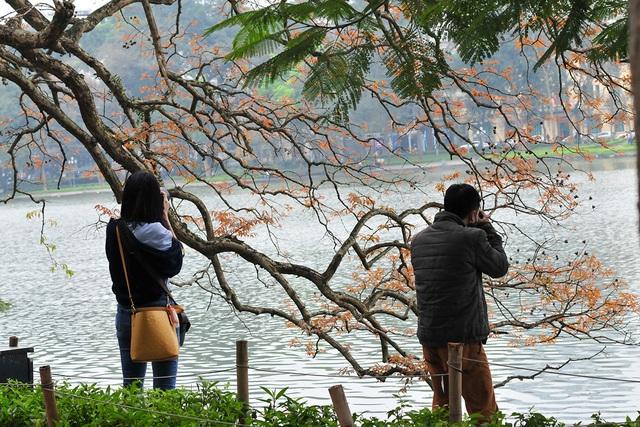 Dân chụp ảnh mê mẩn với cây bằng lăng huyền thoại bên Hồ Gươm đang thay lá - Ảnh 10.