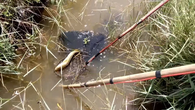 Điều tra vụ người đàn ông chết thảm khi đánh cá bằng kích điện ở rừng U Minh - Ảnh 1.
