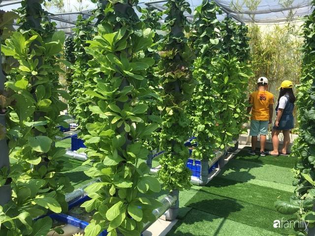 Khu vườn thẳng đứng xanh mướt rau sạch trên nóc chung cư ở TP. HCM - Ảnh 16.