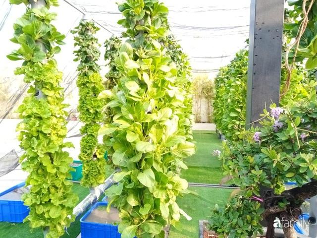 Khu vườn thẳng đứng xanh mướt rau sạch trên nóc chung cư ở TP. HCM - Ảnh 18.