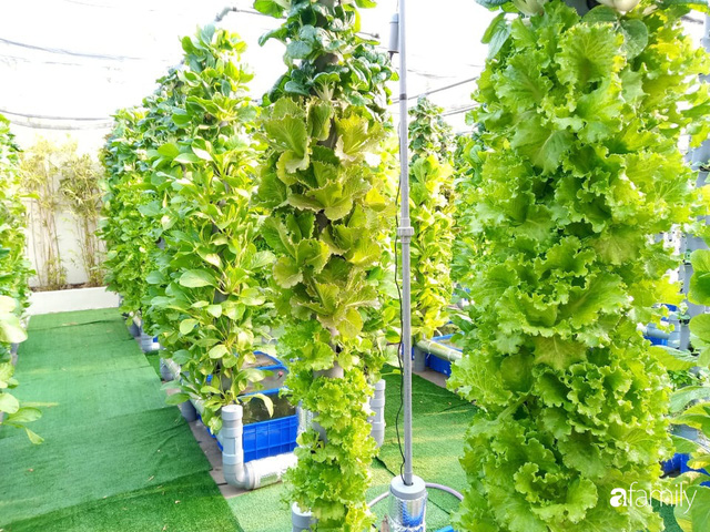 Khu vườn thẳng đứng xanh mướt rau sạch trên nóc chung cư ở TP. HCM - Ảnh 4.