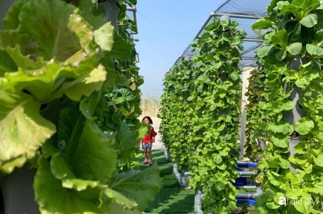 Khu vườn thẳng đứng xanh mướt rau sạch trên nóc chung cư ở TP. HCM - Ảnh 22.