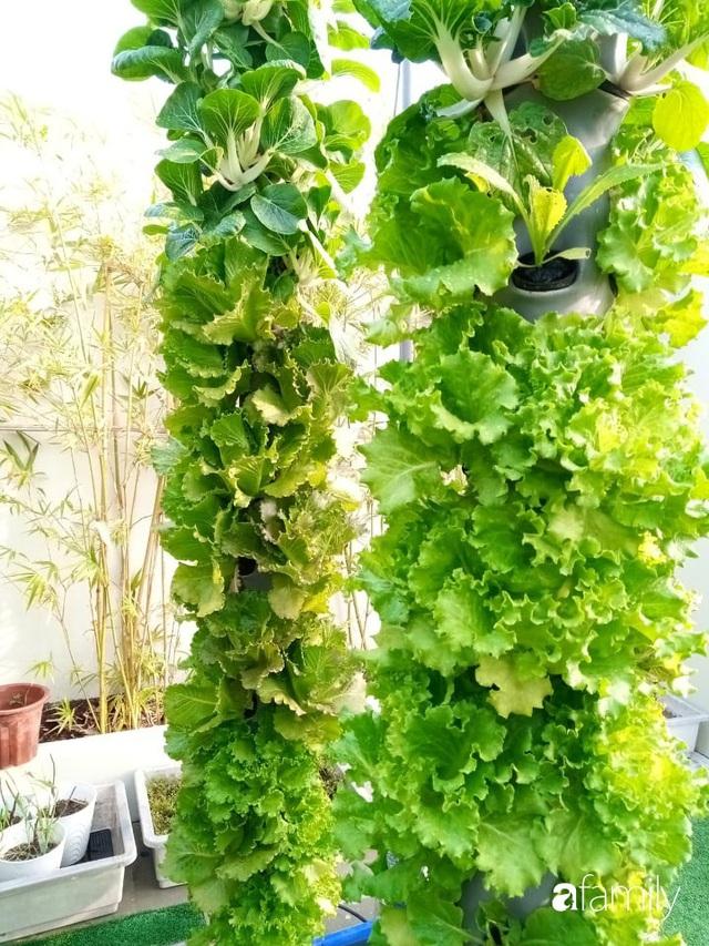 Khu vườn thẳng đứng xanh mướt rau sạch trên nóc chung cư ở TP. HCM - Ảnh 23.