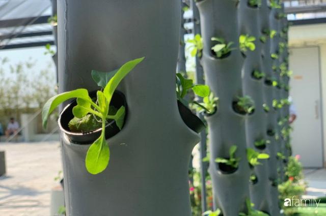 Khu vườn thẳng đứng xanh mướt rau sạch trên nóc chung cư ở TP. HCM - Ảnh 24.