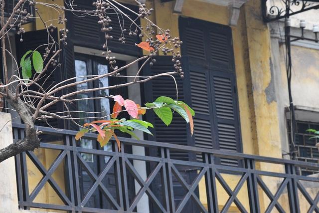 Vẻ đẹp thơ mộng trên những khung cửa sổ chỉ có ở mùa cây thay lá - Ảnh 6.