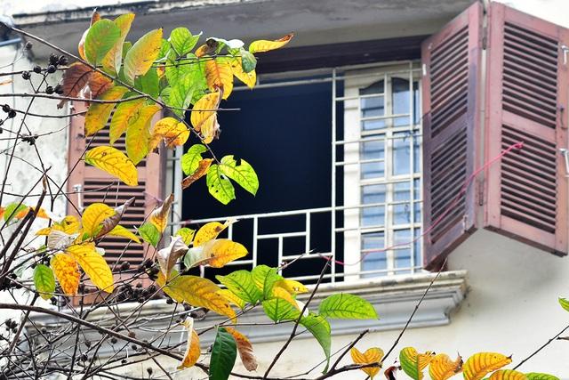 Vẻ đẹp thơ mộng trên những khung cửa sổ chỉ có ở mùa cây thay lá - Ảnh 10.
