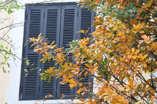 Vẻ đẹp thơ mộng trên những khung cửa sổ chỉ có ở mùa cây thay lá - Ảnh 9.